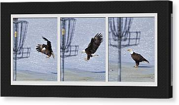 Canvas Print featuring the photograph Eagle Triptych by Rob Graham