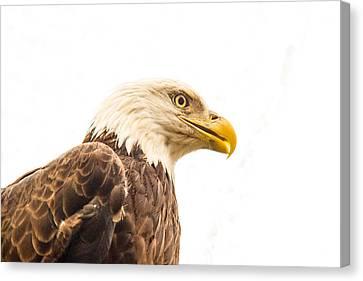Eagle With Prey Spied Canvas Print by Douglas Barnett