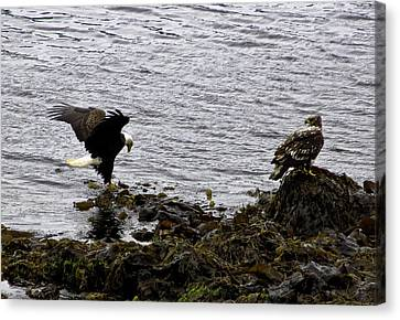 Canvas Print featuring the photograph Eagle7 by Timothy Latta