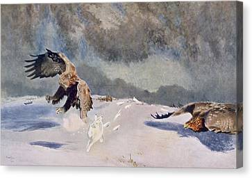 Hunting Canvas Print - Eagles And Rabbit, 1922 by Bruno Andreas Liljefors