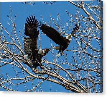Canvas Print featuring the photograph Eagles by John Freidenberg