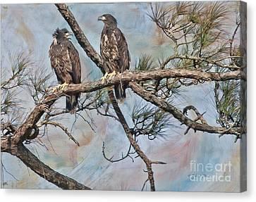 Eaglets In Oil Canvas Print by Deborah Benoit
