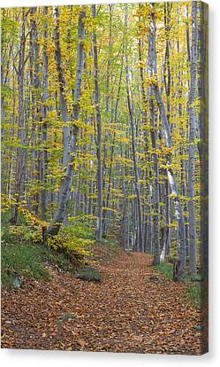 Canvas Print featuring the photograph Early Autumn Vitosha Mountain Forest Bulgaria by Jivko Nakev