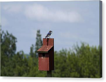 Early Bird Catches The Worm Canvas Print