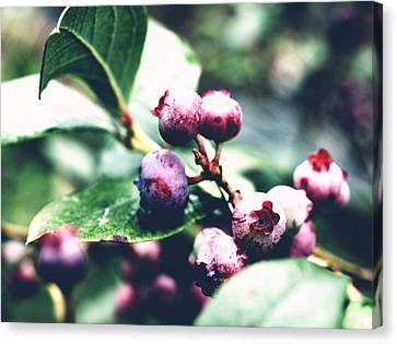 Early Blueberries Canvas Print
