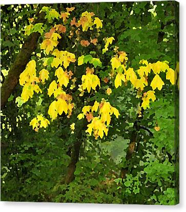 Early Fall Color 26311 Pknife Canvas Print