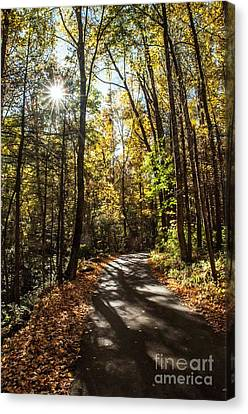 Early Fall On Roaring Fork Road Canvas Print by Debbie Green