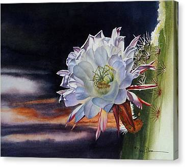 Early Morning Argentine Giant Cactus Flower Canvas Print