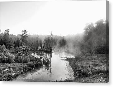 Early Morning At The Rookery Canvas Print by Bruce A Lee