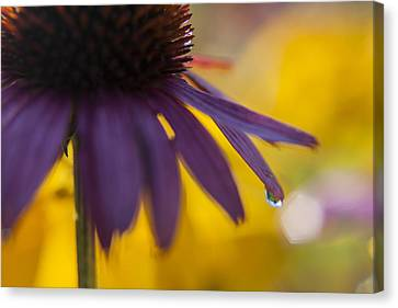 Early Morning Dew Drops Canvas Print by Amber Kresge