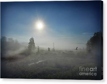 Early Morning Fog At Canaan Valley Canvas Print by Dan Friend