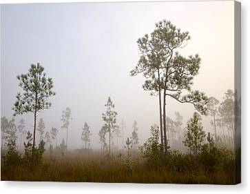 Early Morning Fog Canvas Print by Rudy Umans
