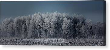 Early Morning Frost Canvas Print