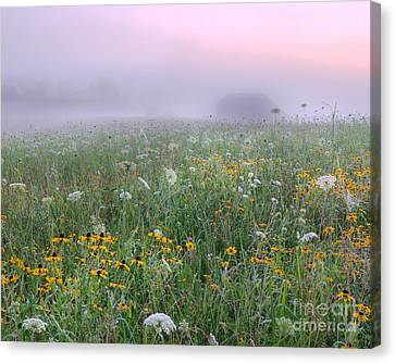 Early Morning Meadow Canvas Print
