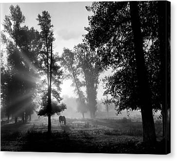 Early Morning Myst And A Horse Canvas Print by Wernher Krutein