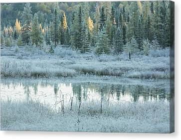 Early Morning Over Costello Creek Canvas Print