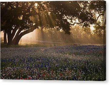 Foggy Day Canvas Print - Early Morning Rays by Eggers Photography