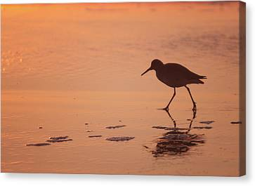 Canvas Print featuring the photograph Early Morning Walk by Sharon Jones