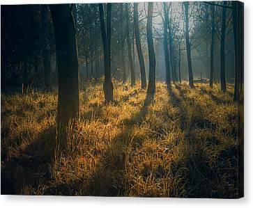 Fall Grass Canvas Print - Early Morning Woodland Walk by Chris Fletcher
