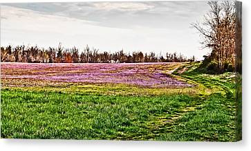 Canvas Print featuring the photograph Early Spring Field by Greg Jackson