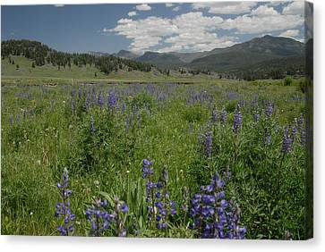 Early Spring In Yellowstone Canvas Print by Larry Moloney