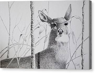 Early Winters Whitetail Canvas Print