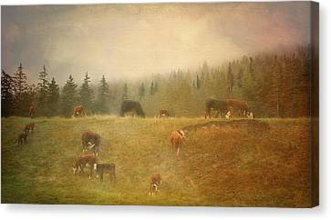 Early Morning  Canvas Print by Betty  Pauwels