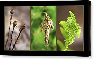 Earth Triptych Canvas Print by Christina Rollo