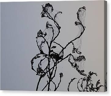 Earth's Sweat On Spiderweb Canvas Print