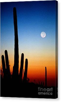 Earthshine Canvas Print by Douglas Taylor