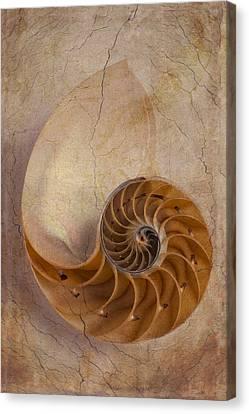Seashell Fine Art Canvas Print - Earthy Nautilus Shell  by Garry Gay