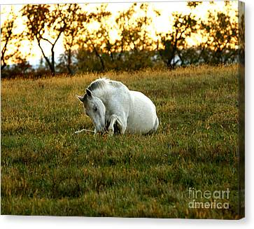 Canvas Print featuring the photograph Easier Lying Down by Carol Lynn Coronios