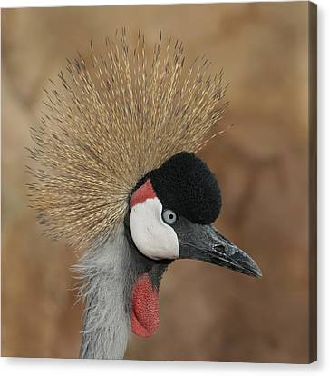 East African Crowned Crane Canvas Print