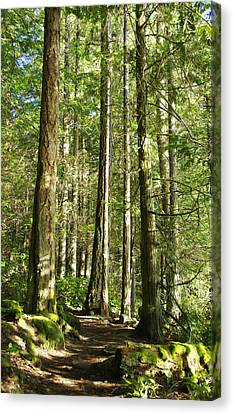 East Sooke Park Trail Canvas Print by Marilyn Wilson