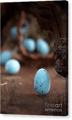 Easter Blue Eggs Canvas Print by Mythja  Photography