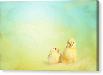 Easter Chicks Canvas Print