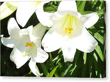 Easter Lilies At Longue Vue Canvas Print by Katie Spicuzza