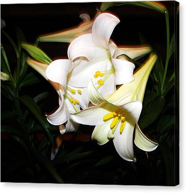 Easter Lilies Canvas Print by Pamela Hyde Wilson