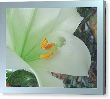 Drop Canvas Print - Easter Lily by Kae Cheatham