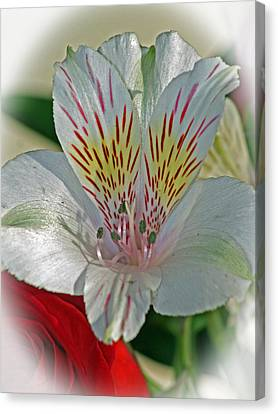 Easter Lily Canvas Print by Karen Adams