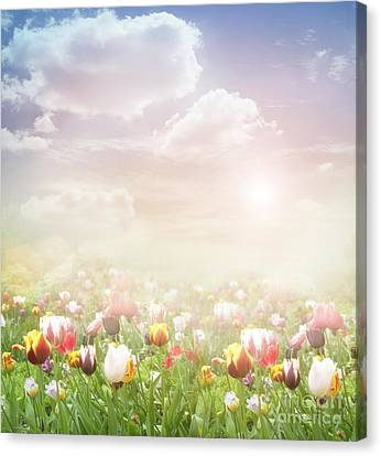 Easter Spring  Background Canvas Print by Mythja  Photography
