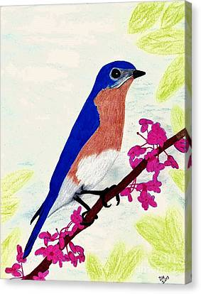Canvas Print featuring the drawing Florida - Eastern - Blue Bird by D Hackett