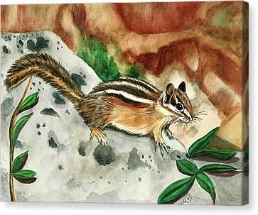 Eastern Chipmunk Canvas Print by Marcianna Howard