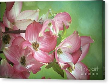 Eastern Dogwood II Canvas Print by Beve Brown-Clark Photography