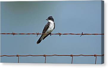Eastern Kingbird On Wire Canvas Print