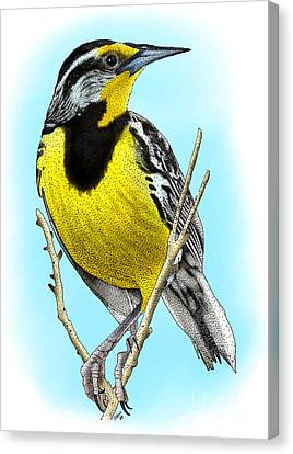 Meadowlark Canvas Print - Eastern Meadowlark by Roger Hall