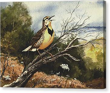 Eastern Meadowlark Canvas Print by Sam Sidders