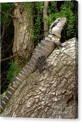 Eastern Water Dragon Canvas Print by Bev Conover