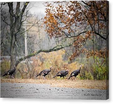 Eastern Wild Turkey  Canvas Print by Walter Herrit