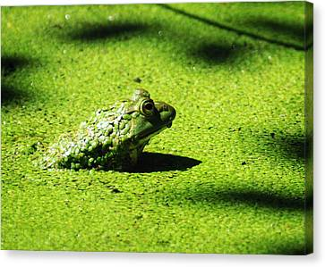Easy Being Green Canvas Print by Rebecca Sherman
